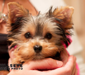 cute small dog, phoenix pet photography