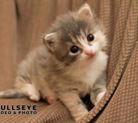 kitten, cute, newborn, pet photography